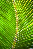 Palm leaves background. Beautiful beach tree branch Stock Photos