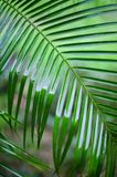 Palm leaves background. Beautiful dark tree branch photo Royalty Free Stock Photos