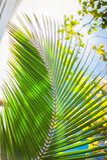 Palm leaves background, beautiful tree, Palm Sunday. Palm leaves background, beautiful tree vertical photo, Palm Sunday symbol Stock Photo