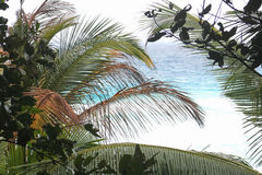 Palm leaves on a background of blue sea. Seychelles Stock Photo