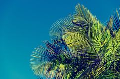Palm leaves background with blue sky. Palm leaves background, blue sky, retro tonning Stock Photo