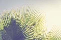 Palm leaves background with blue sky. Palm leaves background, blue sky, retro tonning Royalty Free Stock Photography