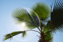 Palm leaves on a background of blue sky and sun Royalty Free Stock Photo