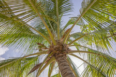 Palm leaves background. Fresh green palm leaves background, bright sun light through exotic foliage Royalty Free Stock Photo