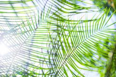 Palm leaves background in light key. Palm leaves background, beautiful beach tree branch over the sunshine Royalty Free Stock Images