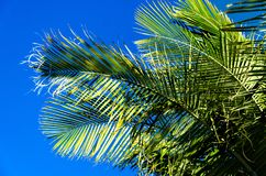 Palm leaves background. With blue sky Stock Image
