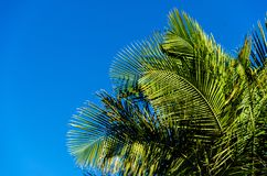 Palm leaves background. With blue sky Royalty Free Stock Photography