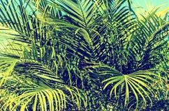 Palm leaves background. Retro tonning Stock Images