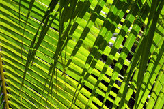 Palm leaves background with shadow Royalty Free Stock Image
