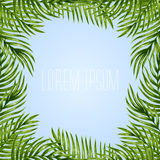 Palm leaves background Royalty Free Stock Photos
