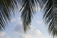 Palm leaves on a background of white clouds. Tropical island in the ocean Royalty Free Stock Image