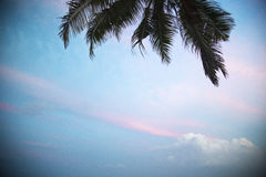 Palm leaves on a background of white clouds. Tropical island in the ocean Royalty Free Stock Images