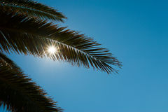 Palm leaves in backlight Royalty Free Stock Images