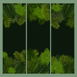 Palm leaves banners Stock Photography