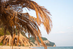 Palm leaves on the beach with a hot summer sunny day. Palm tree clear summer skies Royalty Free Stock Photos