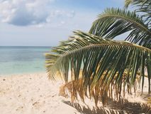 Palm Leaves Beach Sand Stock Image