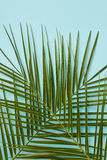 Palm leaves on blue background Stock Photo