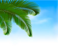 Palm leaves on blue background. Summer holidays co Royalty Free Stock Image