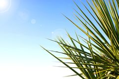 Palm leaves and blue sky. Royalty Free Stock Photo