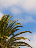Palm leaves and blue sky. Palm leaves with a blue sky with clouds in the background stock images