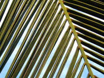 Palm leaves with blue sky. Palm leaves detail with a blue cloudy sky background Royalty Free Stock Photo