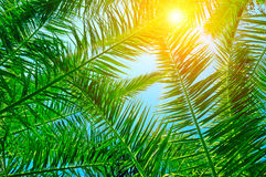 Palm leaves and blue sky Stock Photo