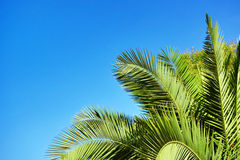 Palm leaves on blue sky background Royalty Free Stock Images