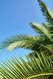 Palm leaves on blue sky background Stock Photos