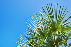 Palm leaves on blue sky background Stock Photography
