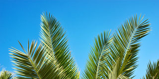 Palm leaves on blue sky background Royalty Free Stock Photos