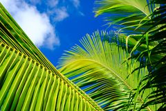 Palm leaves on blue sky background. weekend Holidays tropical beach concept background stock images