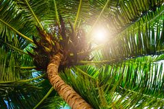 Palm leaves on blue sky background. weekend Holidays tropical beach concept background stock photo