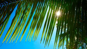 Palm leaves on blue sky background. weekend Holidays tropical beach concept background royalty free stock images