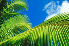 Palm leaves on blue sky background. weekend Holidays tropical beach concept background stock image