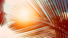 Palm leaves on blue sky background. weekend Holidays tropical beach concept background, Vacation holidays concept. vintage toning.  royalty free stock photos