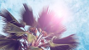 Palm leaves on blue sky background. weekend Holidays tropical beach concept background, Vacation holidays concept. vintage toning.  stock photography