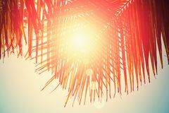 Palm leaves on blue sky background. weekend Holidays tropical beach concept background; Vacation holidays concept. vintage toning.  royalty free stock photo
