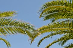 Palm leaves and blue sky Royalty Free Stock Photography