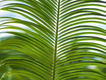 Palm leaves with blue sky Stock Photography