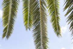 Palm leaves and blue sky Royalty Free Stock Photos