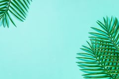 Palm leaves on blue top view. stock photography