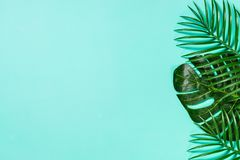 Palm leaves on blue top view. royalty free stock photo