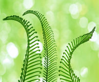 Palm leaves and bokeh Royalty Free Stock Image