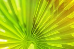 Palm Leaves Branches Sun Light Natural Background. Leaves of a palm tree in bright sunlight. Vintage Background Royalty Free Stock Photos