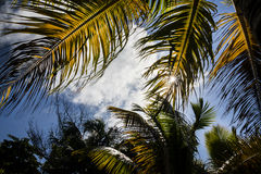 Palm leaves. In bright sunny day Stock Photos