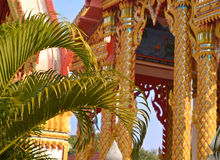 Palm leaves in Buddhist temple Royalty Free Stock Image