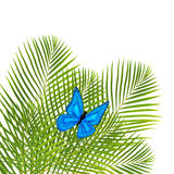 Palm leaves with butterfly Stock Images