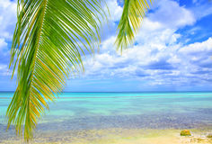 Palm leaves and caribbean sea . Stock Image
