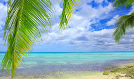 Palm leaves and caribbean sea . Stock Images