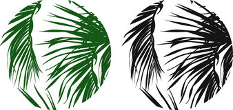 Palm leaves in a circle Stock Image